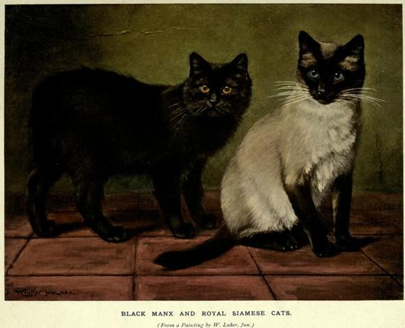 Manx Cats from the Past, The Book of the Cat, Frances Simpson